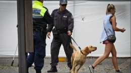 Sniffer Dogs at Dance Festival