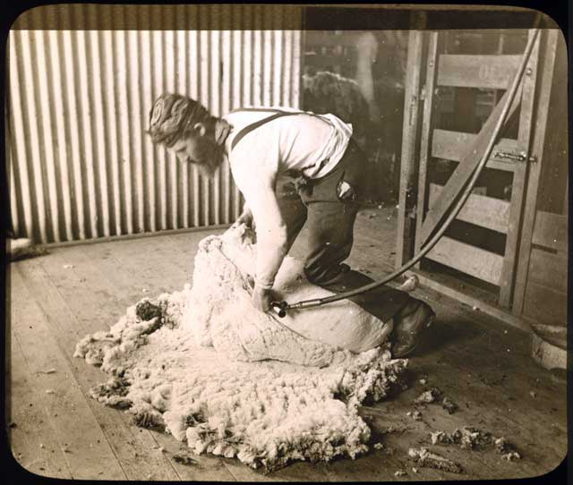 Aussie Shearer