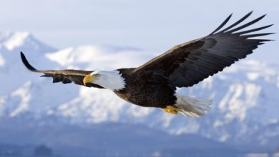 American Eagle forever free