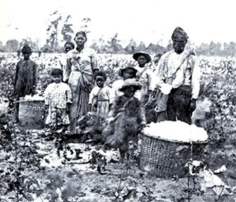 Third World Farm Slave Labour