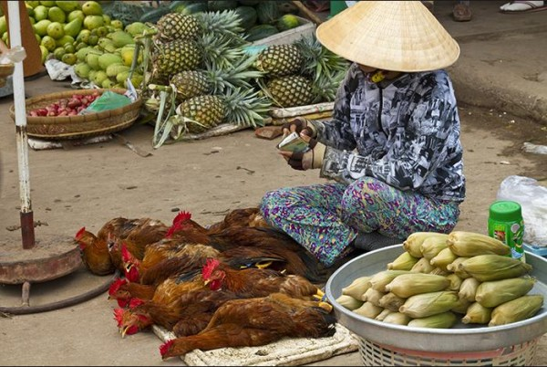 Third World Food Standards