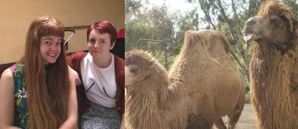 Nicky Minus camel deviance