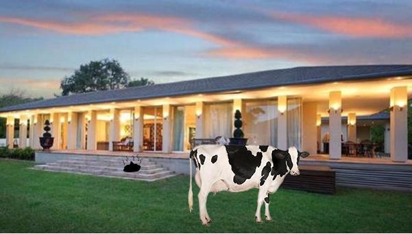 Murray Goulburn exploiting dairy farmers