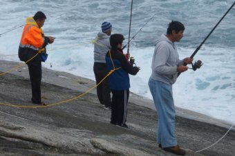 asian-rock-fisher-fools